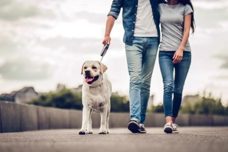 wandelen voor meer stappen per dag